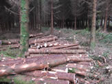 3rd Forestry Investment Plan site at Drumahaire,